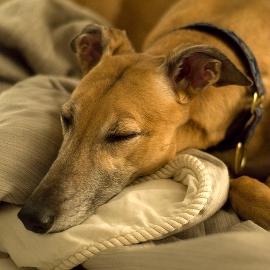 Let your dog sleep peacefully