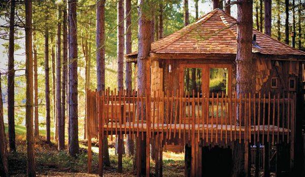 Tree House Holidays