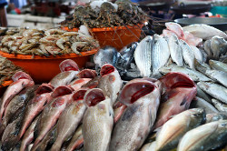 Mina Fish Market