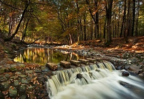 Tollymore Forest - copyright Stephen Emerson