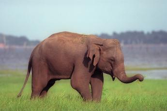 Elephant Rides Anyone?