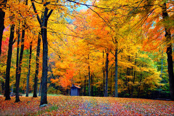 Top 10 Autumn Foliage Destinations Essential Travel Magazine