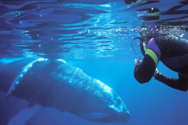 Spot whales