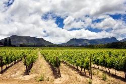 Garden Route Vineyard - Cape Town