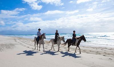 Pakiri Horse Riding