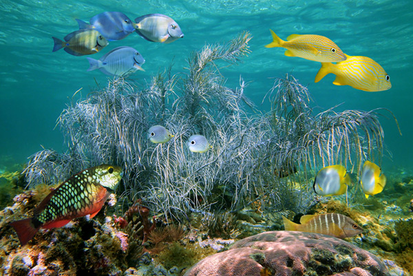 Andros Coral Reef