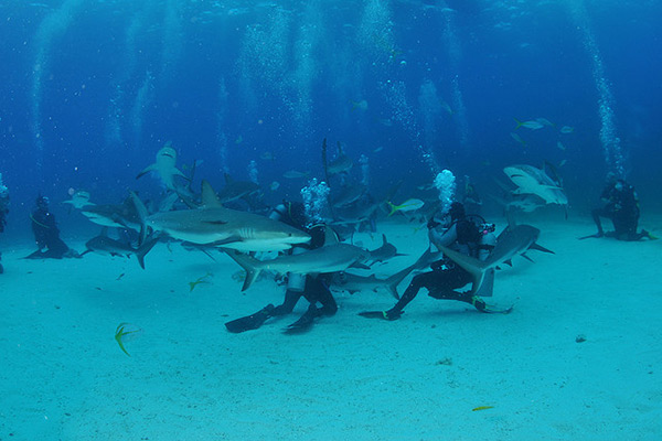 Diving in the Andros waters