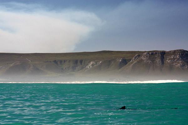 Dyer Island