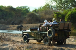 A Game Drive in Zambia