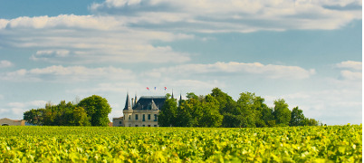 Bordeaux Wine Farm