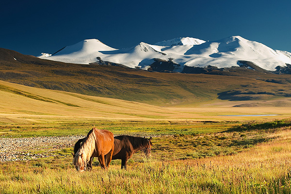 Honeymoon in Mongolia