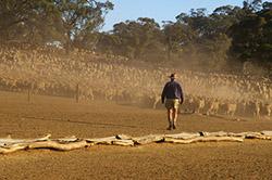 Livestock in Australia