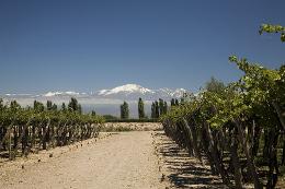 Patagonia Neuquen Wine Route