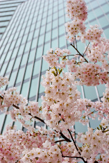 Tokyo Blossoms