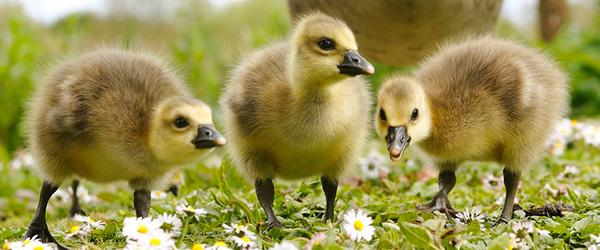 The Wildfowl & Wetlands Trust